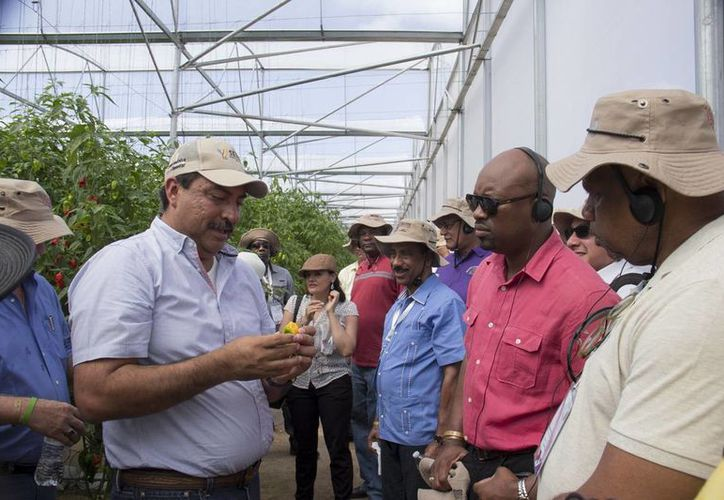 Juan Canul Pérez, titular de la Seder, muestra en Hoctún un chile habanero a los representantes de países caribeños. (Fotos cortesía del Gobierno estatal)