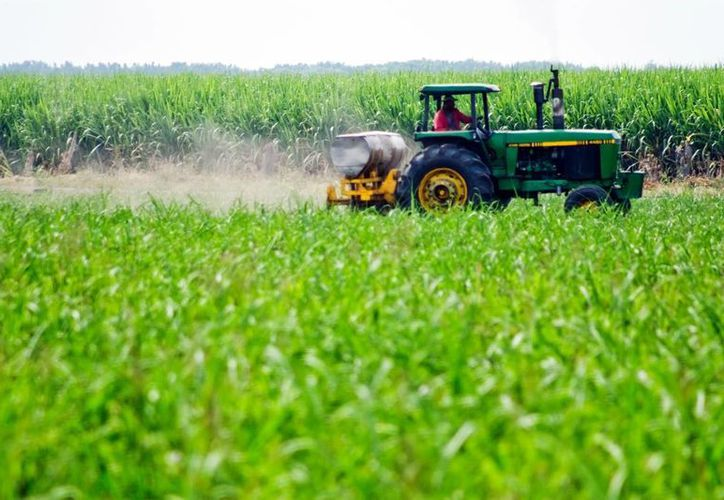 Lo que falta es diversificar los cultivos e invertir. (Archivo SIPSE)