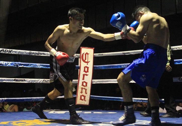 La función boxística se realizará este sábado 22 de octubre. (Raúl Caballero/SIPSE)