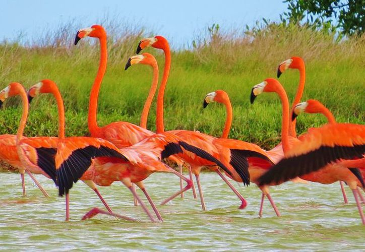 La colocación de la tecnología se realizó en el Área Natural Protegida Ría Lagartos. (Cortesía)