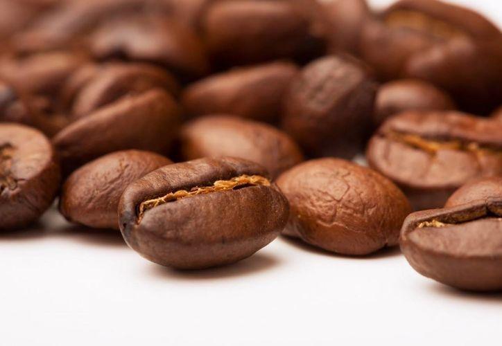 El estado de Chiapas, es uno de los principales productores de café en México, y es afectado por el hongo de rayo de cafeto. (Notimex)