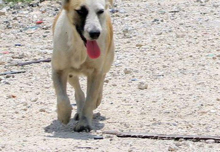 El Ayuntamiento de Progreso advirtió a dueños de mascotas, de multas por dejar en la calle las heces fecales de sus mascotas. (Archivo/SIPSE)