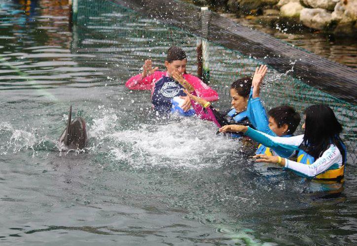 Dolphin Discovery obtuvo la categoría por Mejor Campaña de Redes Sociales. (Gonzalo Zapata/SIPSE)
