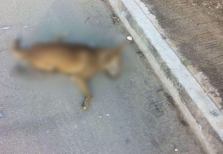 Los animales envenenados murieron en la calle y luego fueron retirados por el ayuntamiento. (Facebook)