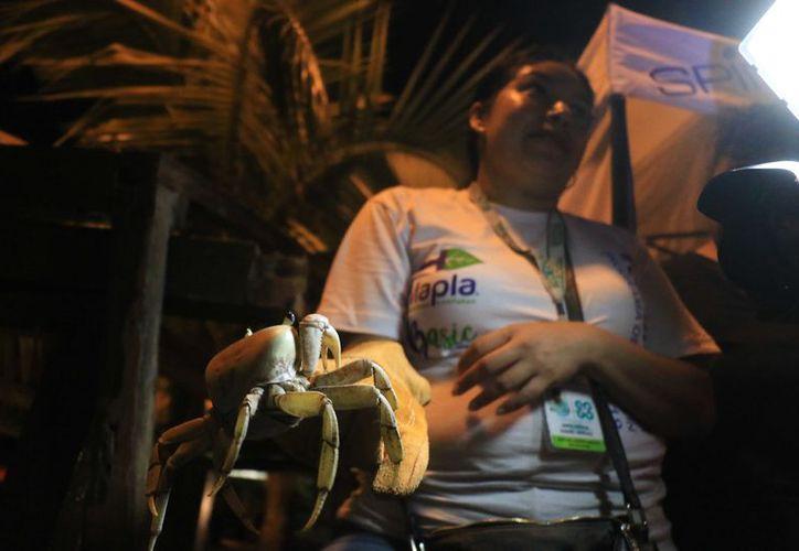 Dos horas por día dura la campaña de protección al cangrejo. (Jesús Tijerina)
