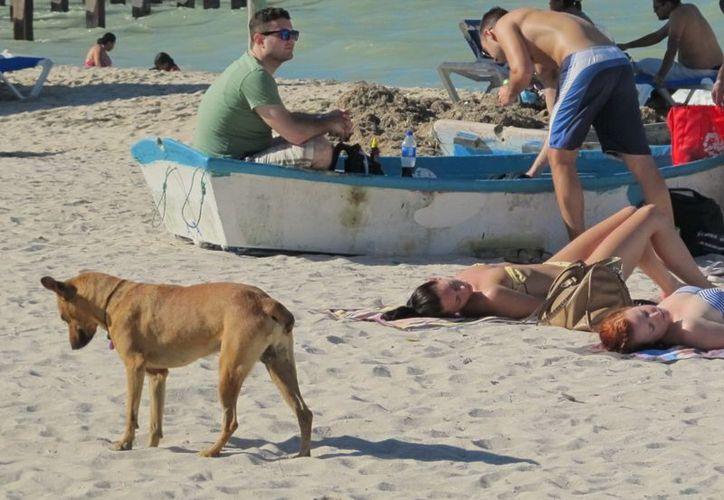 Piden a los progreseños esterilizar a sus mascotas, cuidarlas y no abandonarlas a su suerte en las calles del puerto. (Manuel Pool/SIPSE)