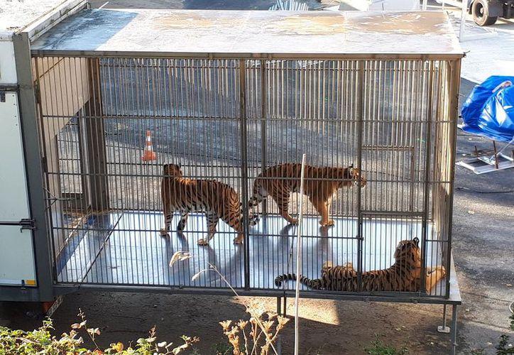 Las autoridades dieron con el tigre huido en el puente du Garigliano. (Twitter).