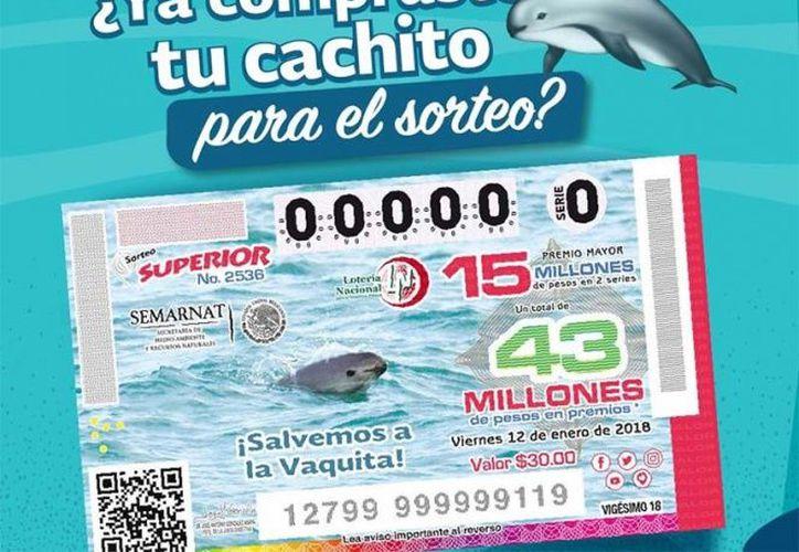 Imagen de la vaquita marina aparece en boleto de la Lotería Nacional. (Especial)