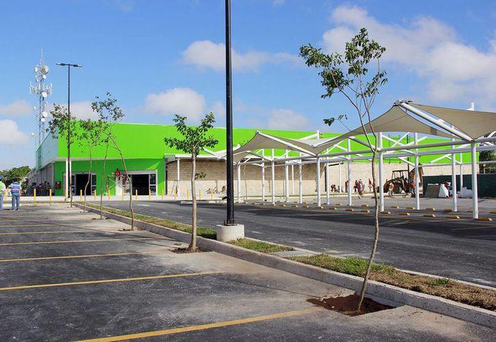 Los árboles se sembraron en el área que ocupará el estacionamiento. (Milenio Novedades)