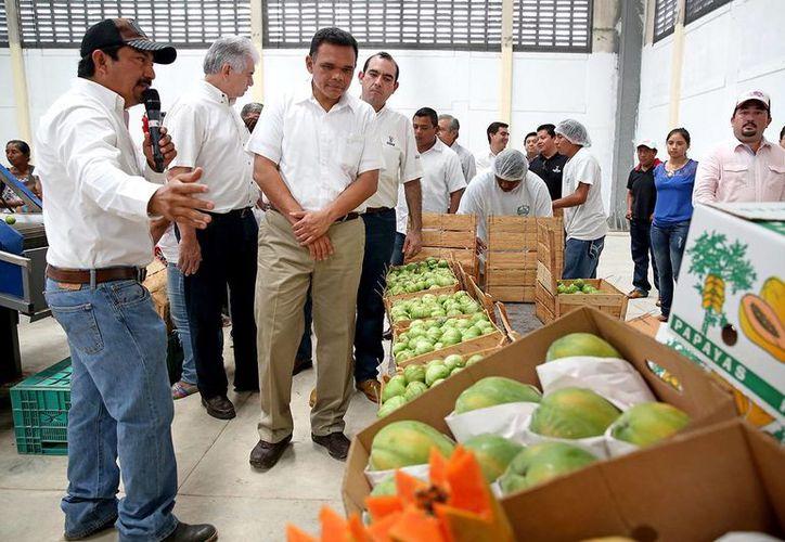 Productos yucatecos serán enviados al mercado estadunidense. (Milenio Novedades)