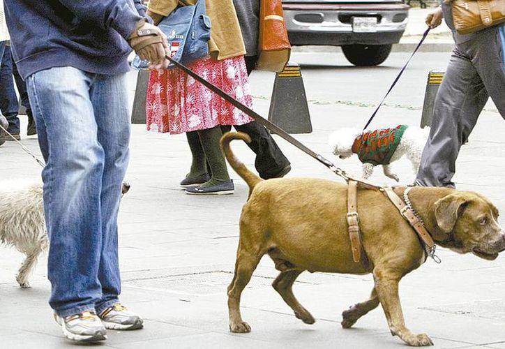 Un bulto de comida de perro que costaba 325 pesos, a partir del 1 de enero quedó en 377. (Claudia Guadarrama/Milenio)