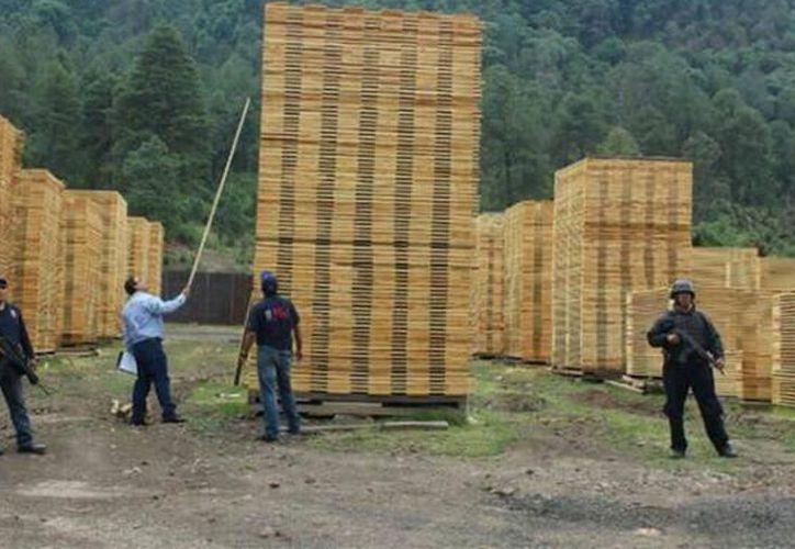 Integrantes de la Profepa resguardaron tocones, tablas, tablones y rodetes de madera de Pich , al no poder acreditar su procedencia legal quienes la transportaban. (SIPSE)