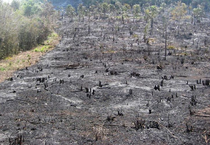 Los incendios que se han registrado en comunidades de Bacalar han consumido casi 200 hectáreas de vegetación arbustiva. (Javier Ortiz/SIPSE)