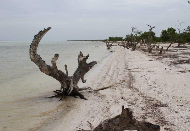 Impulsan el cuidado de los recursos naturales de la isla. (Tomás Álvarez/SIPSE)