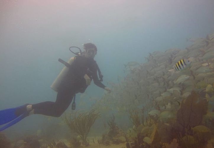 Actualmente algunas especies marinas ya no se ven en las zonas arrecifales dañadas por la arena superpuesta.  (Redacción/SIPSE)
