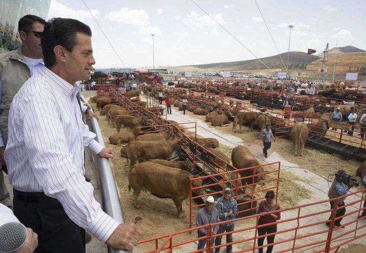 Peña Nieto durante la inauguración de la LXXVIII Asamblea Ordinaria de la Confederación Nacional de Organizaciones Ganaderas en Zacatecas. (presidencia.gob.mx)