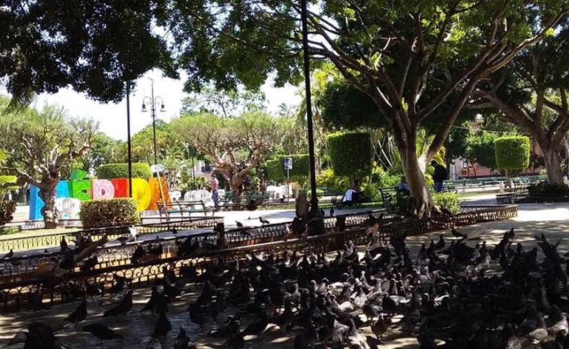 En la Plaza Grande numerosas palomas están acostumbradas a que la gente las alimente. (Novedades Yucatán)