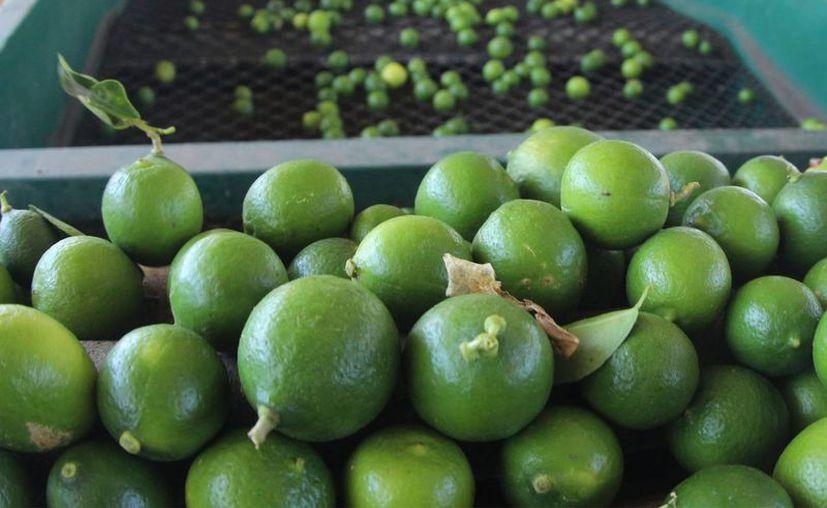 La estabilización del precio del limón dependerá de la producción en campo, así como de la oferta y la demanda. (Notimex)