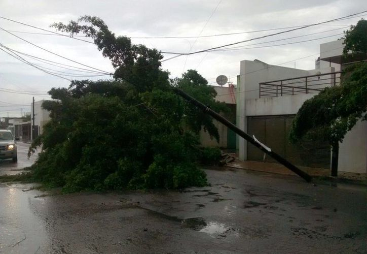 Este lunes los fuertes vientos vespertinos derribaron varios árboles en Mérida. Se espera que el clima lluvioso se mantenga en Yucatán. (Milenio Novedades)