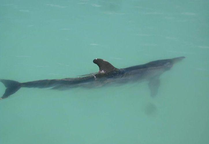 Personal especializado se mantiene al pendiente del cetáceo las 24 horas del día. (Archivo/SIPSE)