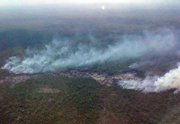 El área de afectación se ha incrementado hasta aproximadamente 30 hectáreas. (Lanrry Parra/SIPSE)