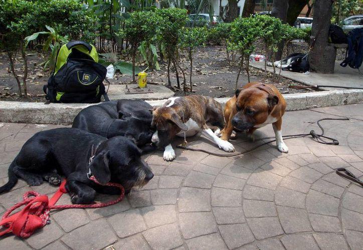 El Día Mundial contra la Rabia se celebra cada año para hacer conciencia sobre la prevención de esa enfermedad y destacar los progresos por erradicarla. Imagen de contexto de unas mascotas en un parque de la Ciudad de México. (Archivo/Notimex)