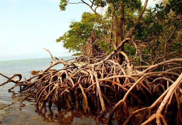 La aguada llamada Kauil, en idioma maya, se abre casi inmóvil en el fondo de un recipiente natural como un ojo de agua, pero de agua muerta, que solamente verla produce una impresión de desagrado. (Jorge Moreno)