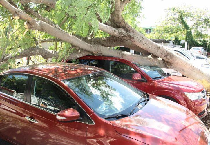 Cen las ramas de un árbol sobre dos automóviles en un estacionamiento de la colonia Alemán. (Jorge Acosta/SIPSE)