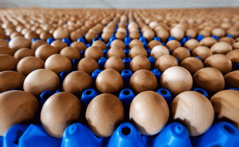 huevos-provenientes-de-una-granja-en-putten-holanda-efe-1