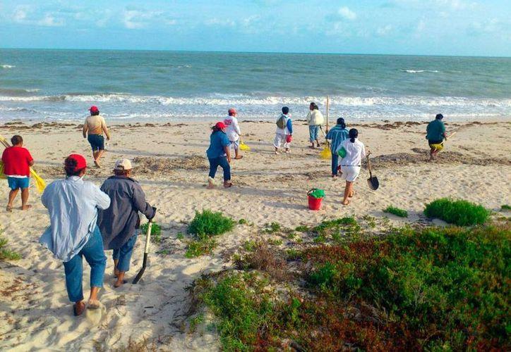 Unas 100 personas limpiaron las playas de Progreso, en el cierre de la temporada vacional del Semana Santa. (Óscar Pérez/Milenio Novedades)
