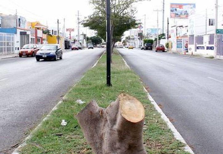 La acción del hombre es un factor que devasta la vegetación. La imagen es de contexto. (Milenio Novedades/Archivo)
