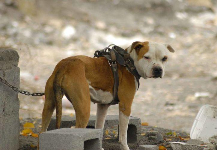 El maltrato animal no sólo significa golpear a las mascotas, sino incluye dejarlos sin comer, olvidarlos en la azotea o en el patio sin una gota de agua. (Foto de Contexto/Internet)