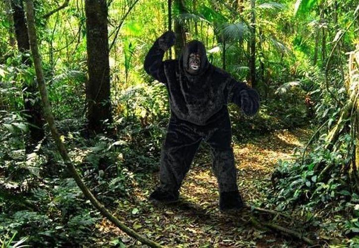 El empleado recibió la dosis de sedante como para tranquilizar a un gorila de 200 kilos. (cadena3.com)
