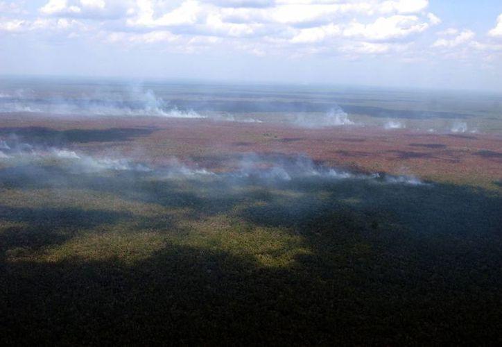 Se frenó la quema de más de seis mil hectáreas de terreno forestal el año pasado. (Israel Leal/SIPSE)