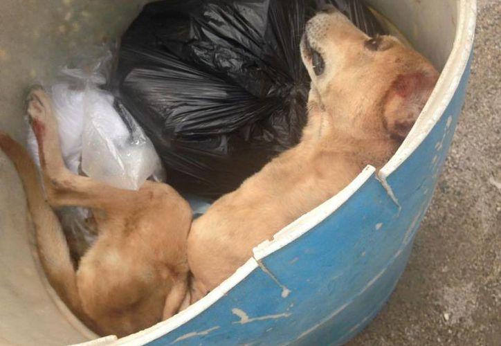 Un perro terminó en un contenedor de basura, luego de que su amo lo golpeara hasta causarle la muerte en Playa del Carmen. (Redacción/SIPSE)