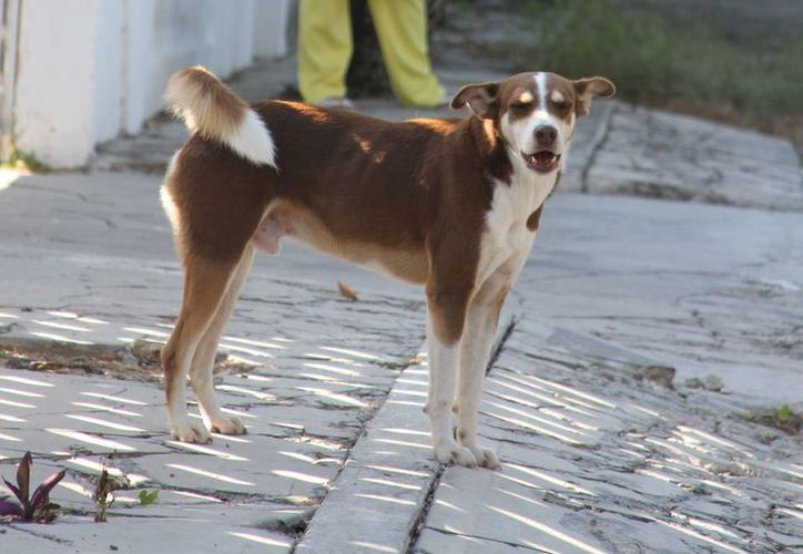 El Centro de Atención Canino atiende por día, cuatro reportes de perros callejeros. (Foto: Eddy Bonilla)
