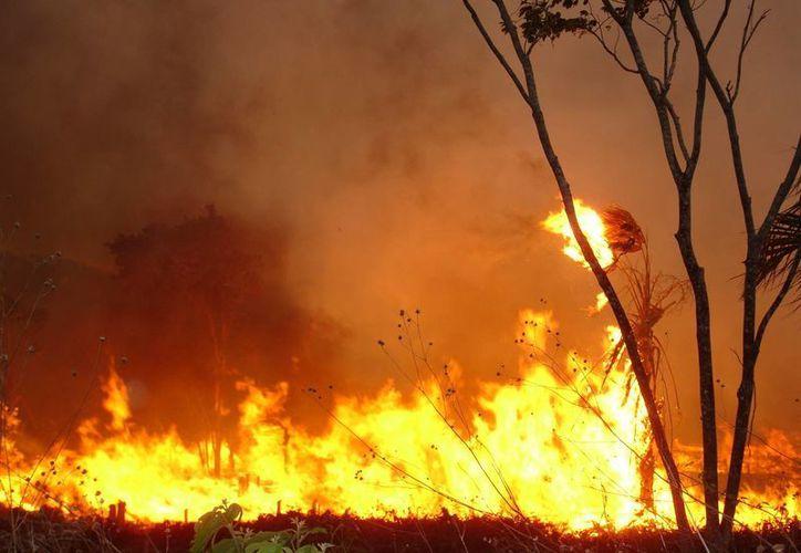En el 2013 las quemas agropecuarias generaron 33 siniestros. (Edgardo Rodríguez/SIPSE)