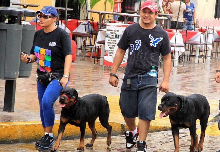 Crean seguro de gastos médicos para perros y gatos en Yucatán. (Milenio Novedades)
