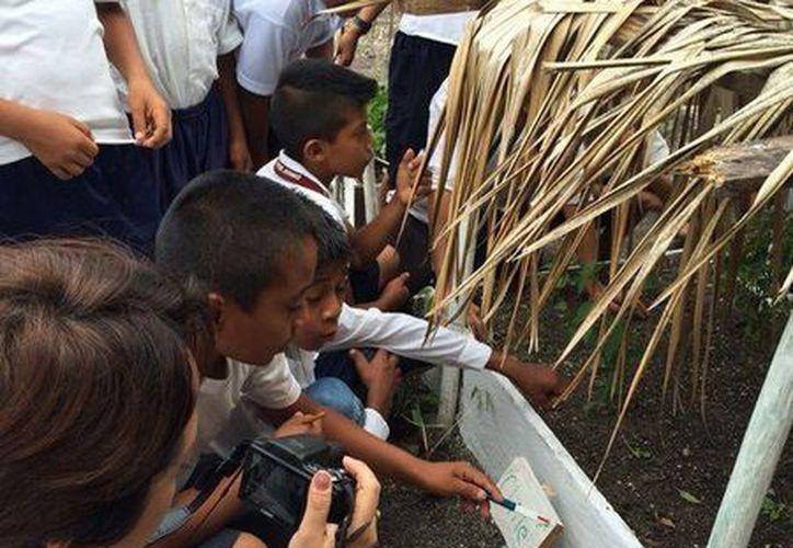 Alumnos y docentes participan en escuelas sustentables. (Redacción/SIPSE)