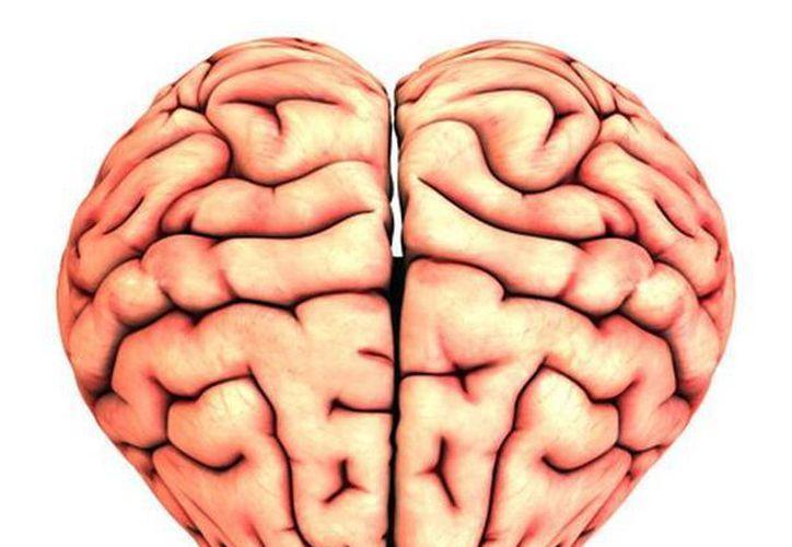 Expertos señalan que 29 áreas del cerebro se involucran directamente con el proceso de enamoramiento. (joydavidson.com)