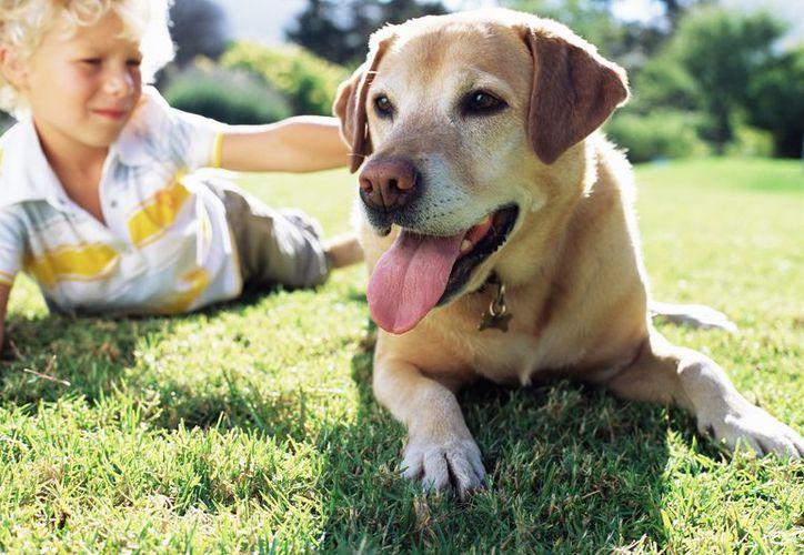 La responsabilidad de las personas hacia los animales es otro aspecto que se fortalece cuando se opta por el emplacamiento de los animales de compañía. (Internet)