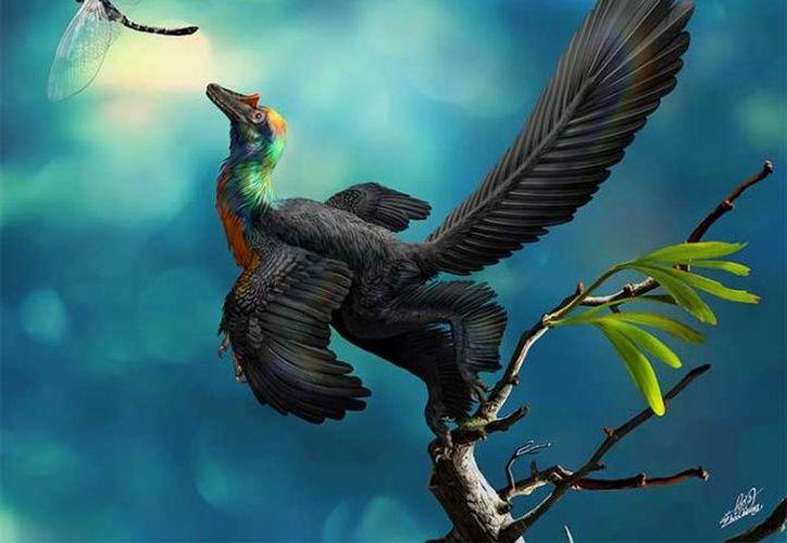 El 'Caihong' era un depredador bípedo con un cráneo parecido al del Velociraptor y dientes afilados. (Livescience)