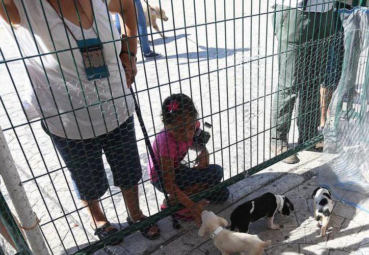 Un total de 44 perros fueron ubicados a nuevos adoptantes. (Cotesía)