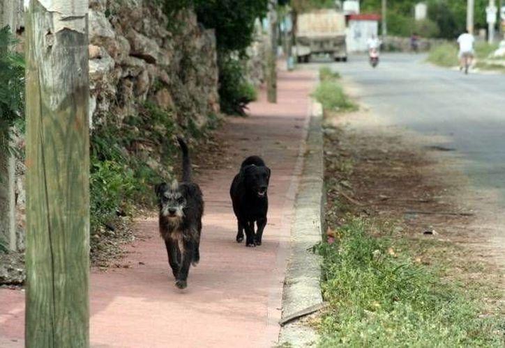 Las mascotas de la familia han atacado a otras personas. (Archivo/SIPSE)