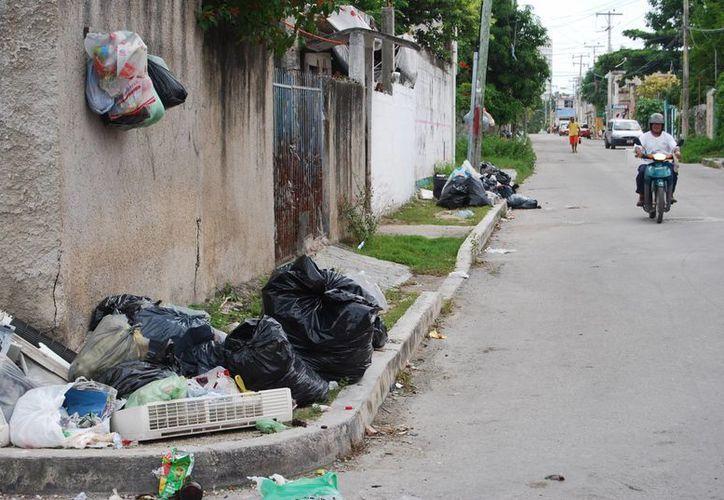 Los vecinos dejan sus bolsas de desperdicios en la esquina de la calle, pues los hogares estaban siendo invadidos por gusanos. (Tomás Álvarez/SIPSE)