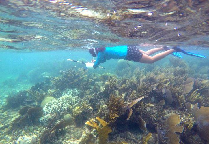 El blanqueamiento coralino afecta en gran medida a los arrecifes que están frente a las costas de Solidaridad. (Foto: Cortesía)
