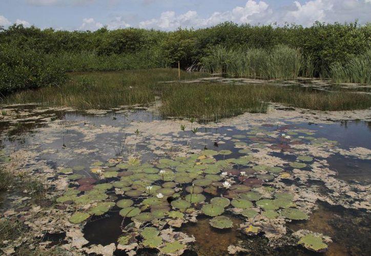 En el Estado existen sitios considerados por el Fondo Mundial para la Naturaleza. (Tomás Álvarez/SIPSE)