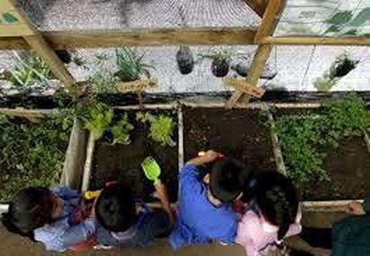 El director de Pronatura México dijo que revisaron la labor que Cemex realiza en Hidalgo y otra agrupación en Playa del Carmen, además de cómo se recuperan espacios urbanos y se educa a niños y jóvenes sobre el medio ambiente. (SIPSE)