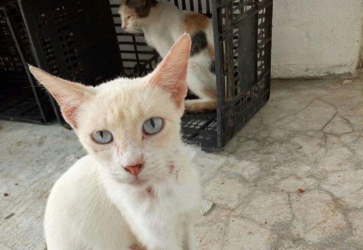 Los felinos lucían desnutridos y algunos tenían sarna. (Foto: Redacción)
