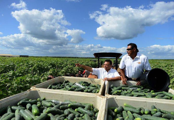 Zapata Bello recorrió los campos de cultivo de la empresa Valle del Sur, así como la planta de procesamiento de hortalizas. (Cortesía)